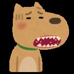 犬の歯周病で息が臭いのはどんな原因と症状があるの?対策と治療法とは?
